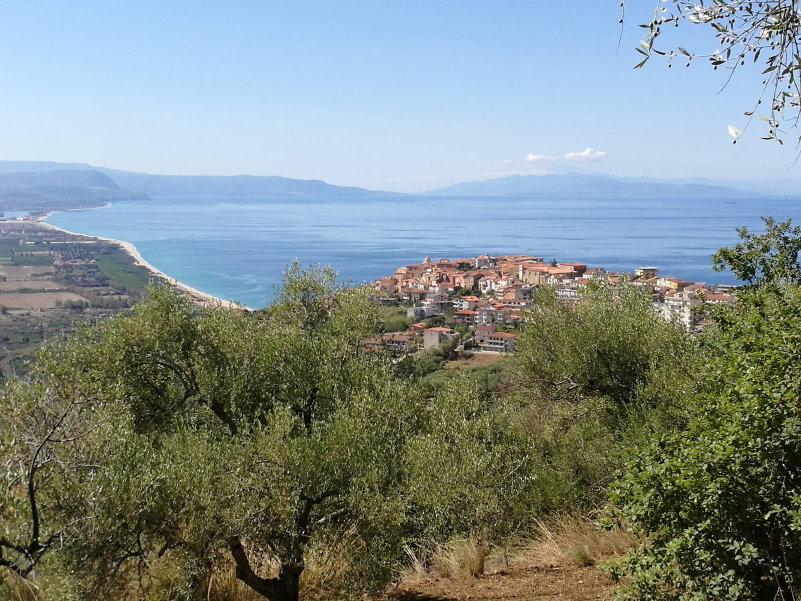 Oliveti con vista sul mare di Nicotera