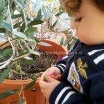 La qualità dell'olio di oliva extravergine